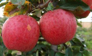 Äpfel und was man damit machen kann